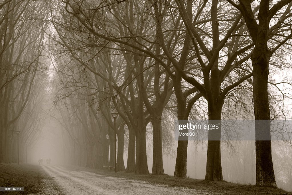 Tree Canopy in the Fog, Sepia Toned : Stock Photo