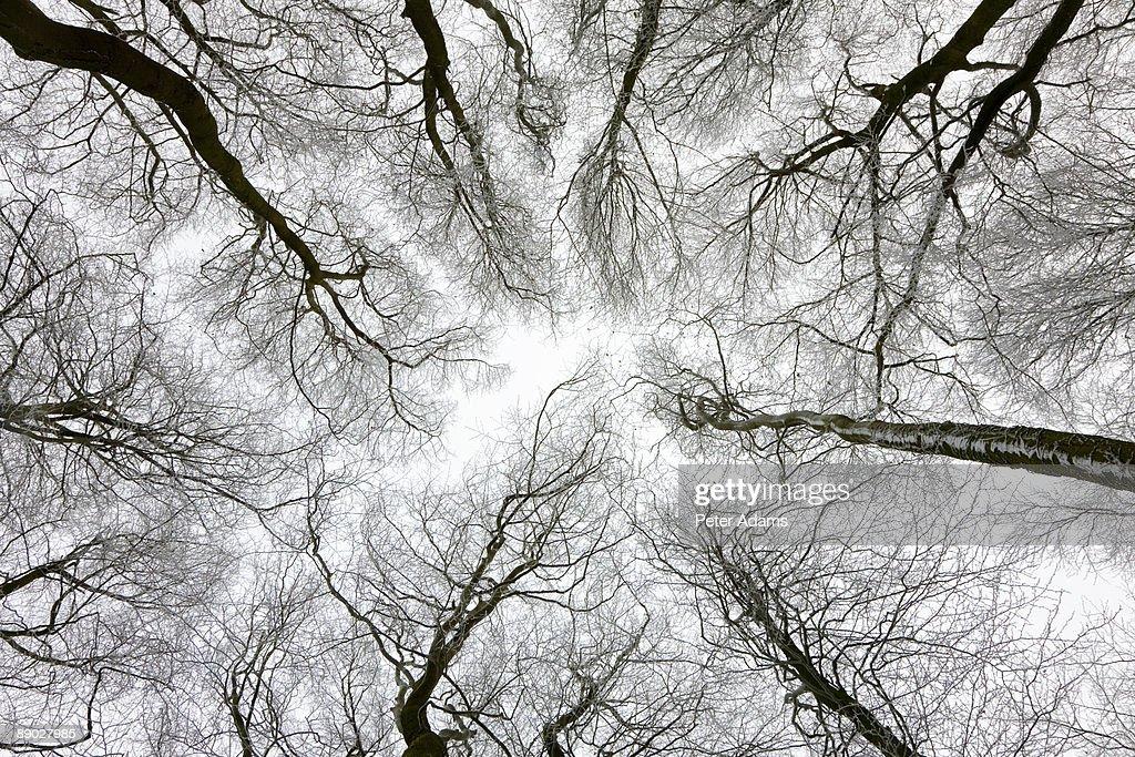 Tree Canopy : Stock Photo