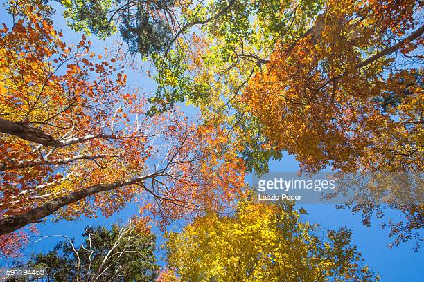 Tree canopy with colourful leaves