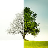 Tree change from winter to summer. The left side is winter and the right side is summer.