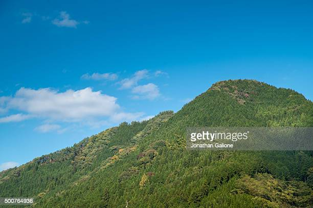 Tree covered mountain top