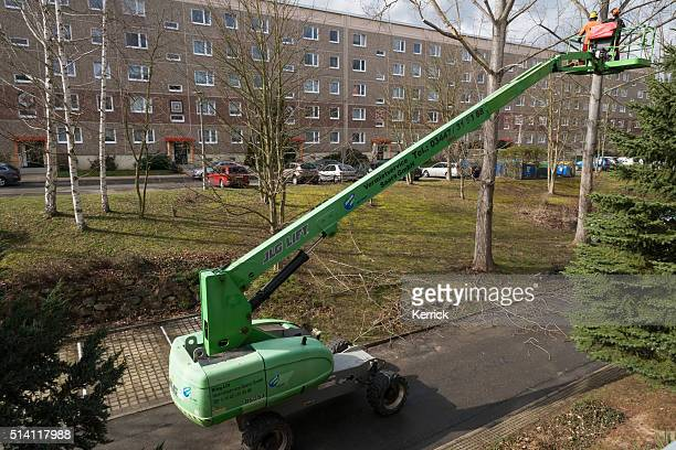 tree cut worker- Pruning and thinning out in the city