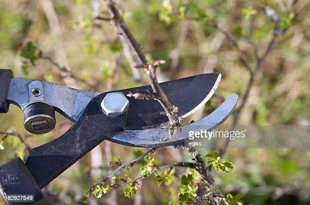 Coupe d'arbre