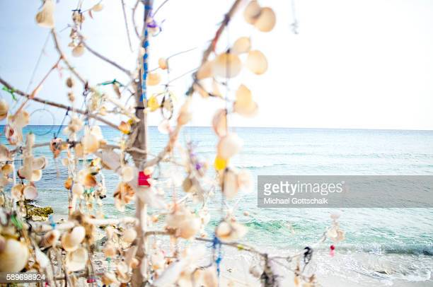A tree decorated with shells at a beach on May 12 2016 in Formentera Spain
