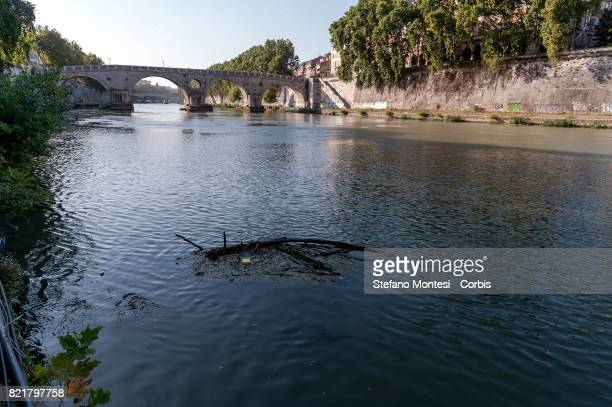 A tree emerges from the Tiber River under Garibaldi Bridge with the low water level due to the drought on July 24 2017 in Rome Italy Because of the...