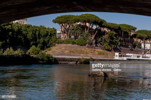 A tree emerges from the Tiber River under the Garibaldi Bridge with the low water level due to the drought on July 24 2017 in Rome Italy Because of...