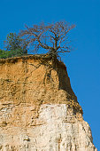 Tree exposing its roots at cliff edge due to soil erosion Provence France
