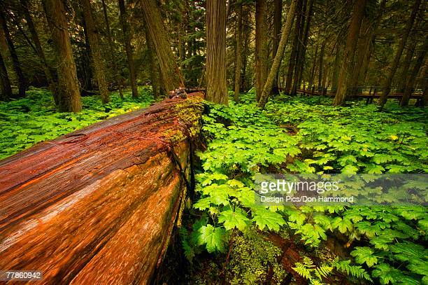 Tree fallen in the forest