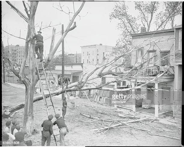 Tree Falls on House Coney Island New York New York Police of Emergency Coney Island have a busy time trying to untangle the tree that fell on the...