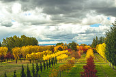 A tree farm near Bozeman, Montana during the fall, offers quite the array of colors!