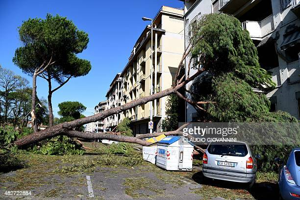 A tree felled by a tornado lies on a car in central Florence on August 2 2015 Some twenty people were wounded on August 1 when a tornado accompanied...