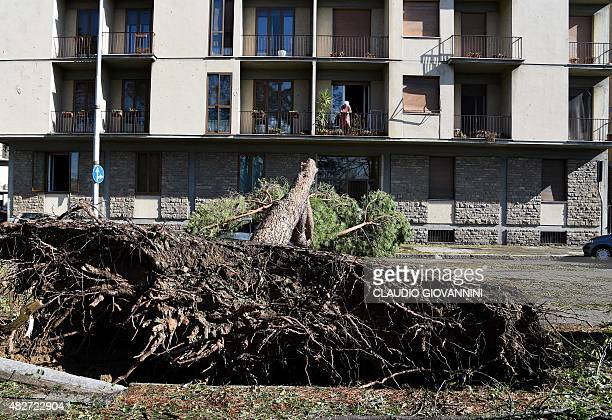 A tree felled by a tornado lies on a street in central Florence on August 2 2015 Some twenty people were wounded on August 1 when a tornado...