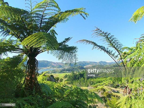 Tree Ferns and the Countryside of New Zealand