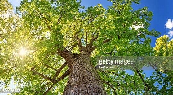 Árboles en la luz de la mañana de follaje : Foto de stock