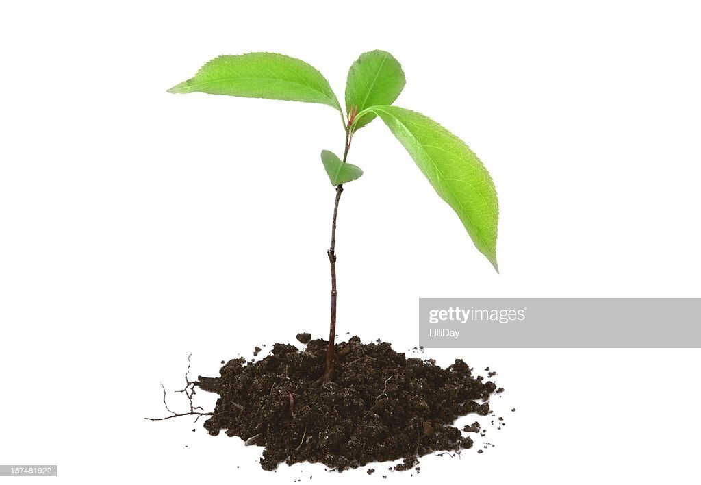 Tree for Growth and Green Concepts : Stock Photo