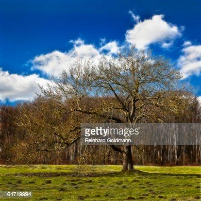 Tree - Fractal Effect