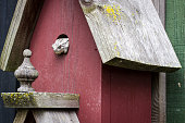 Displaced tree frog evicts birds and boldly takes up residence in a rustic barn red birdhouse. A humorous take of the effects of deforestation.
