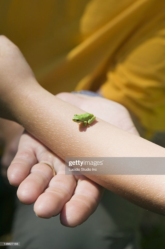 Tree frog on a girl's arm : Stock Photo