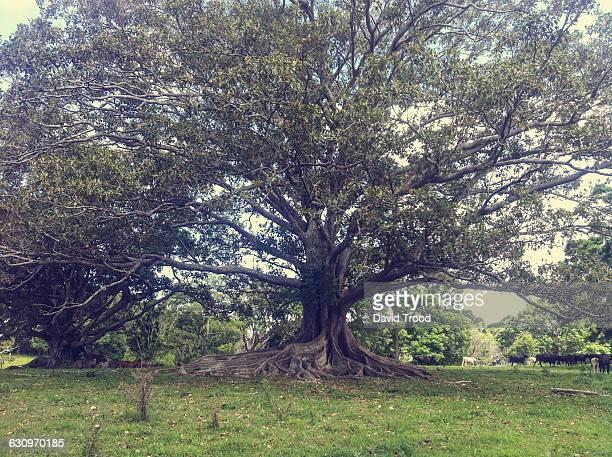 Tree Gazing