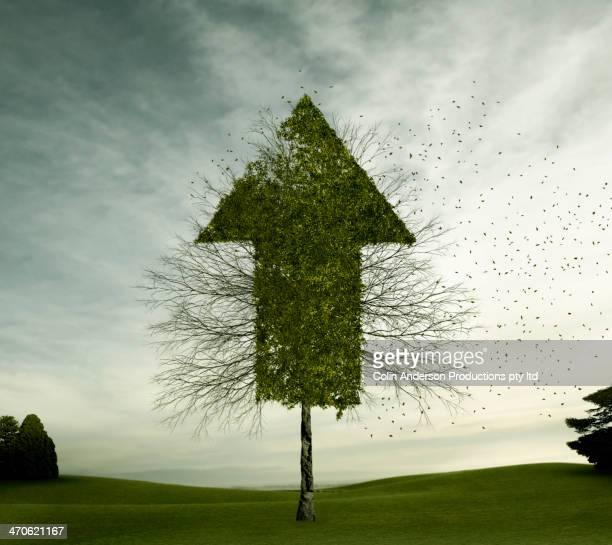Tree growing in arrow shape