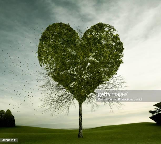 Tree growing in heart-shape