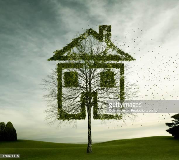 Tree growing in house shape