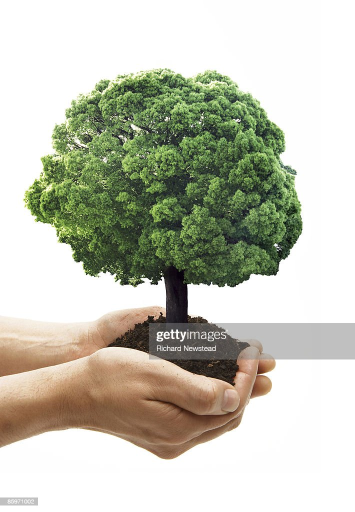 Tree growing in protecting hands : Stock Photo