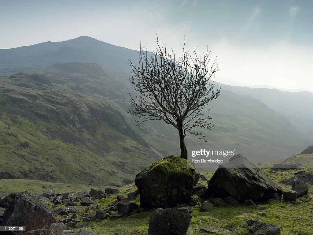 Tree growing in rocky rural landscape : Stock Photo