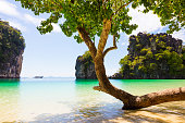 Tree growing on shore against rocks in sea at beach in Aonang Krabi Thailand
