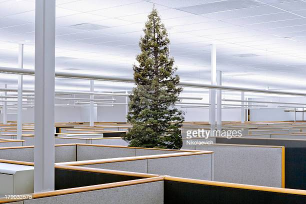 A tree grows amidst office cublicles