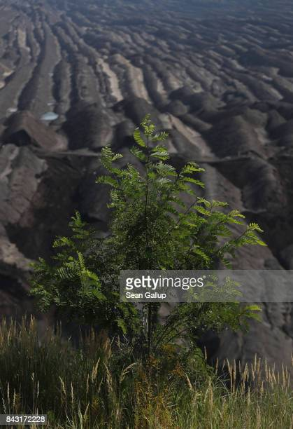 A tree grows on the edge of a rehewn moonscapelike portion of the Welzow Sued openpit lignite coal mine on September 5 2017 near Welzow Germany...