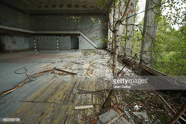 A tree grows through the floor of an abandoned gymnasium on September 29 2015 in Pripyat Ukraine Pripyat lies only a few kilometers from the former...