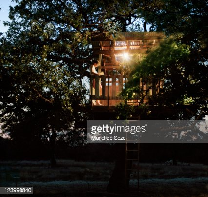Tree house in evening : Stock Photo