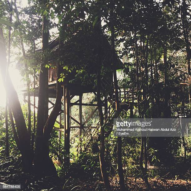 Tree House In Forest At Permai Rainforest Resort