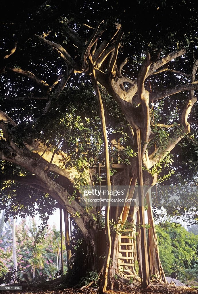 'Tree House, Miami, Florida' : Stock Photo