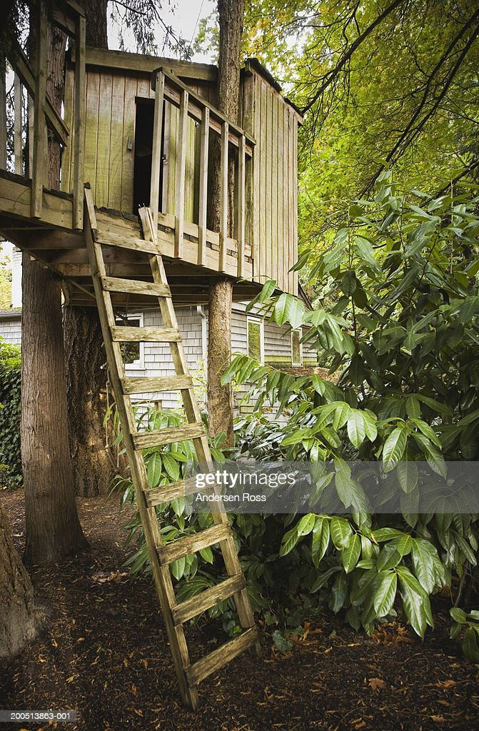 Tree house with house in background, autumn : Stock Photo