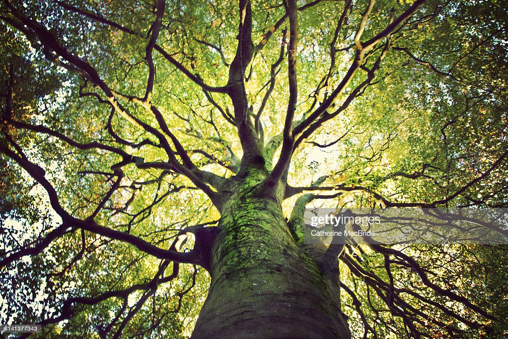 Tree hugging : Stock Photo