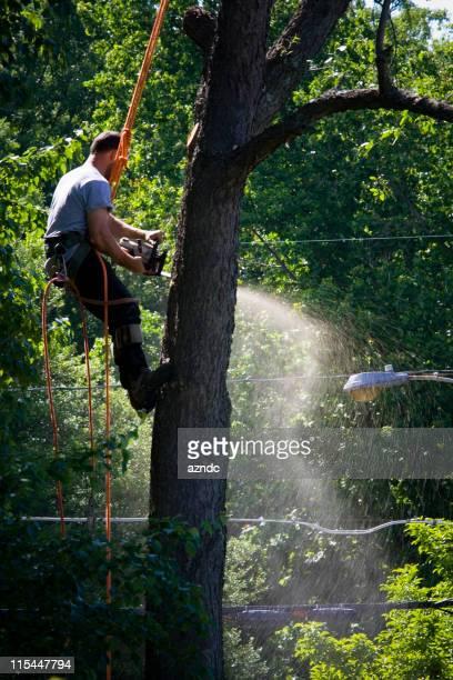 Tree Hunk