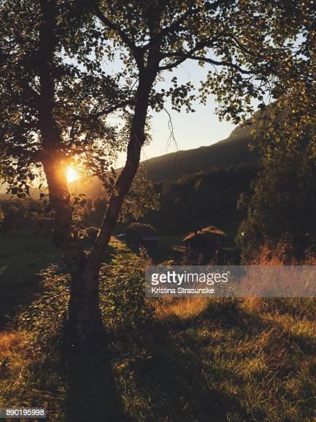 Tree in a beautiful sunset light