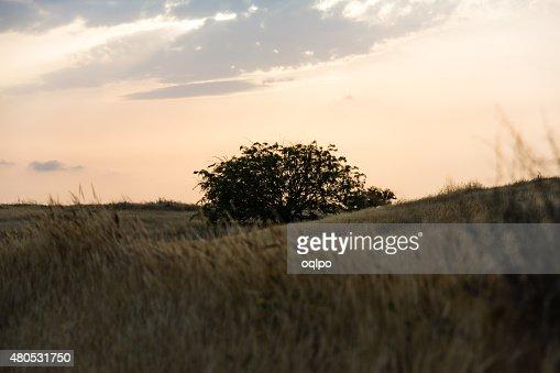 tree in a field : Stockfoto