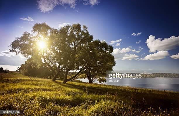 Baum im grünen Bereich