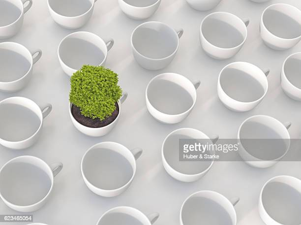 Tree in a white cup between others