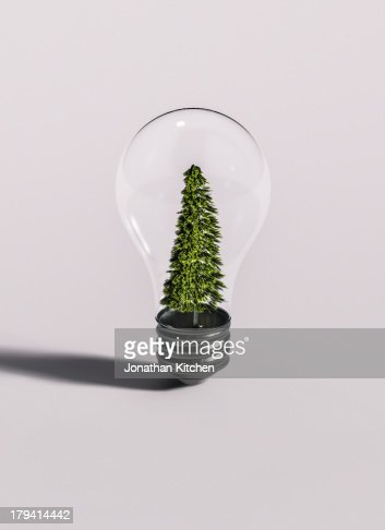 Tree In Bulb on White : Stock Photo