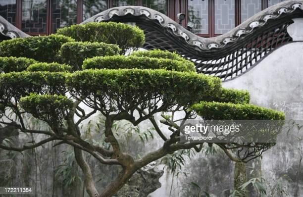 Tree In Chinese Garden