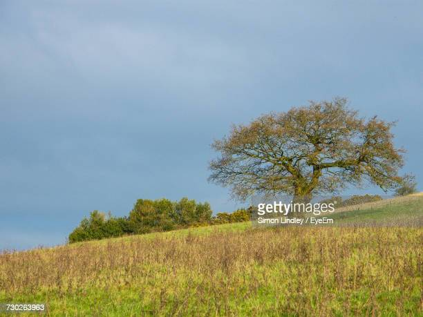 Tree In Field Against Clear Sky
