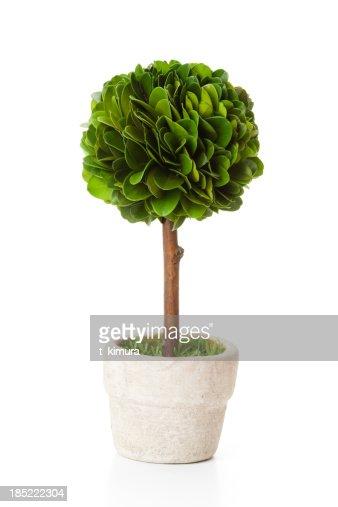 Tree in flowerpot