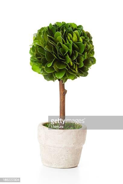 木の flowerpot