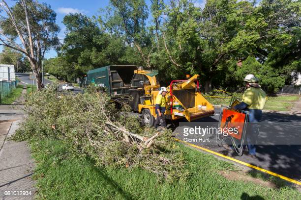 A tree in Graceville felled by high winds and rain is cut up by council workers on March 31 2017 in Brisbane Australia Heavy rain has caused flash...