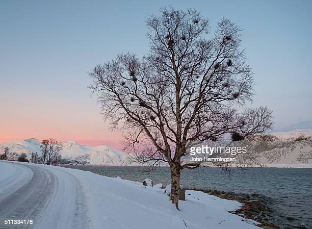 Tree in Grøtfjord