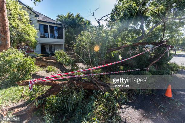 A tree in Herston felled by high winds and rain on March 31 2017 in Brisbane Australia Heavy rain has caused flash flooding in south east Queensland...